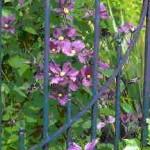 GAM website flower 1